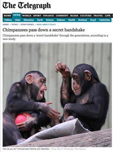 earwig monkeys