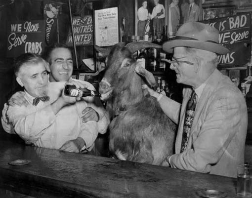 earwig billy cianis and his drinking goat